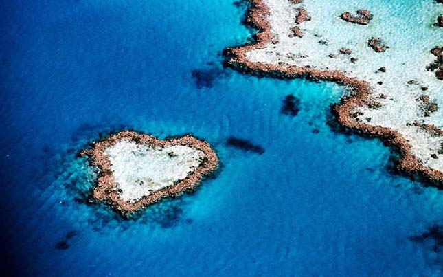 Reef korall Ausztráliában