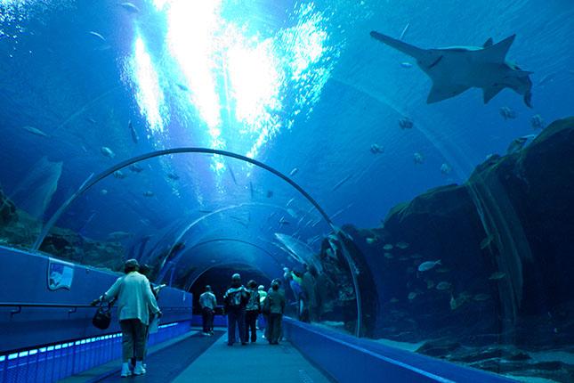 akvarium-3