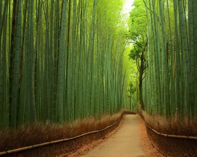 Bambuszerdő Japánban