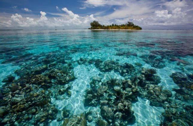 Korallzátonyok - CAYE, Belize