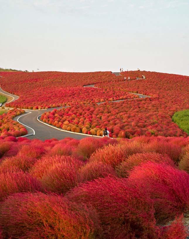 Hitachi Park Japánban