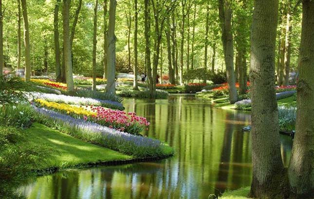 Keukenhof kert, Hollandia