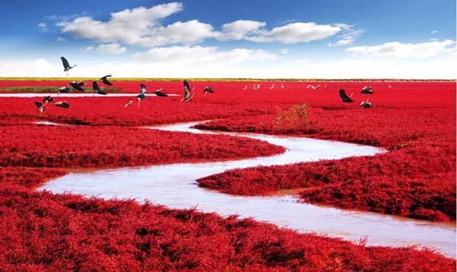 Vörös part, Kína, Panjin