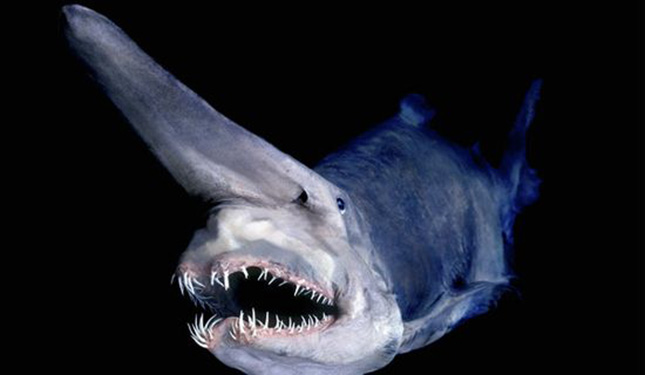 Goblin cápa