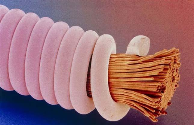 Mikroszkopikus fotó