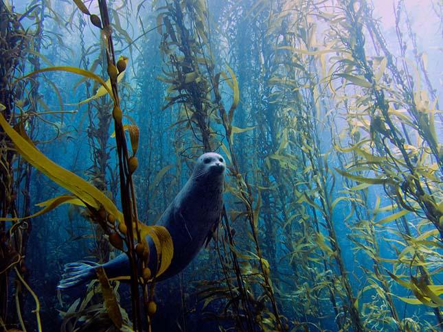 Annual Underwater Photography Contesten 2013