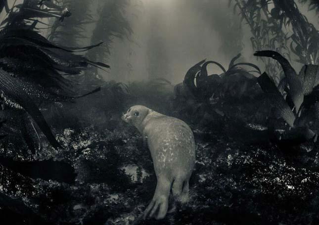 National Geographic fotópályázat  2013