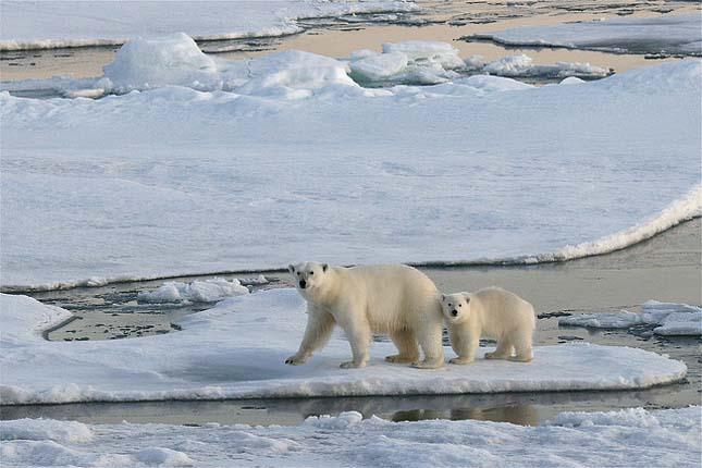 Svalbard jegesmedve szafari