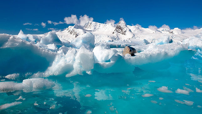 Északi-sarkkör