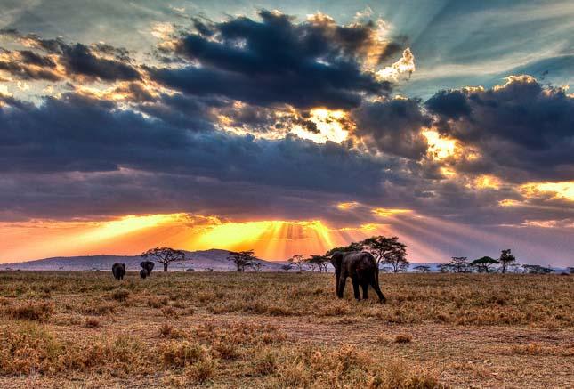 Serengeti Nemzeti Park