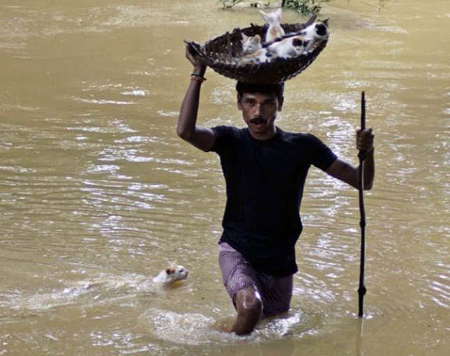 Egy indiai város lakója a monszun idején megmenti a kiscicákat.