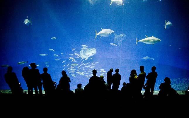 Monterey-öböl Akvárium