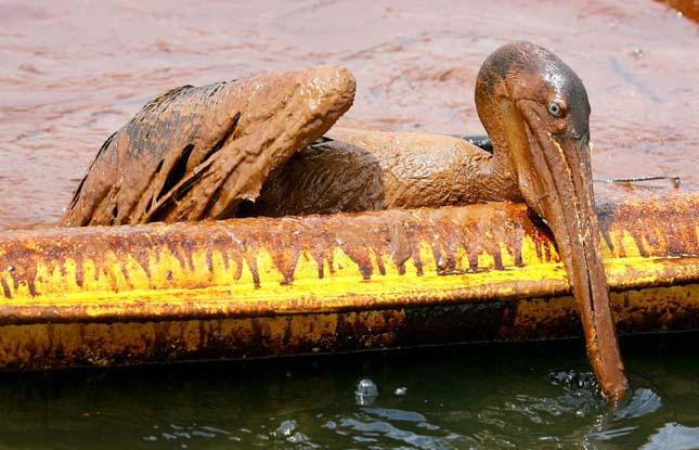 2010-es Mexikói-öbölbeli olajkatasztrófa