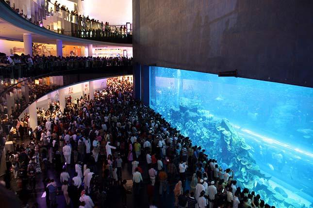 Dubai Mall Akvárium