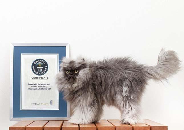 A világ legszőrösebb macskája