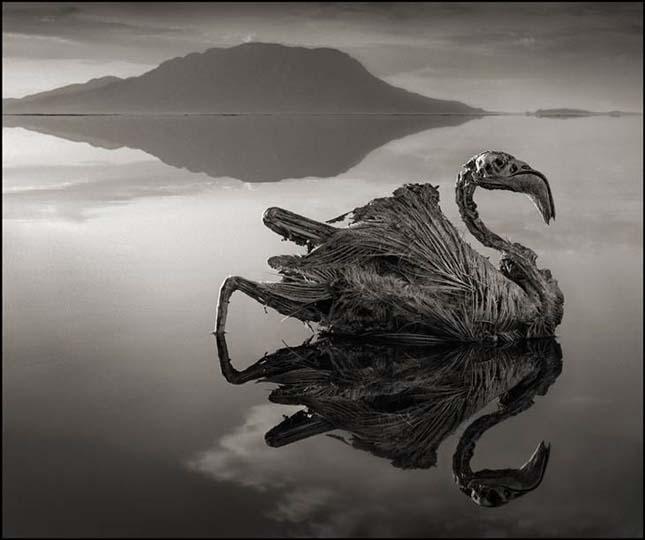 nátron tó