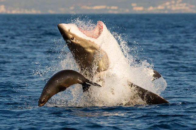Cápatámadás