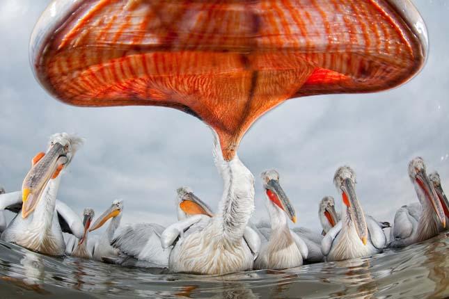 Az Év Természetfotója: Tányérajkúak