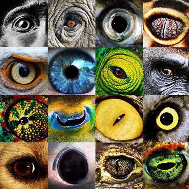 a legjobb látás az állatoknál