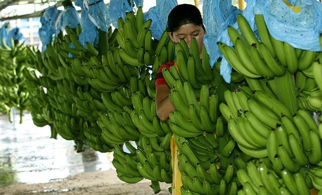 banánfarm