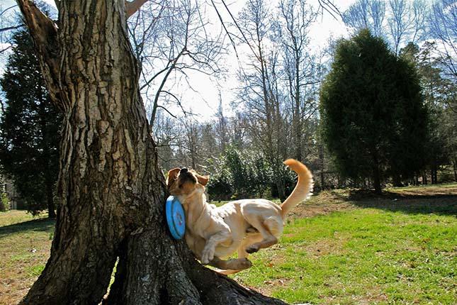 ugyetlen-kutya