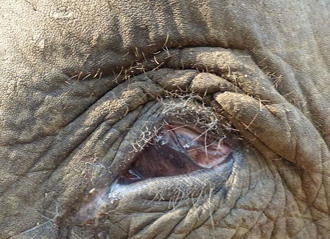 vak-elefant