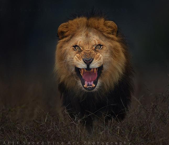 duhos-oroszlan
