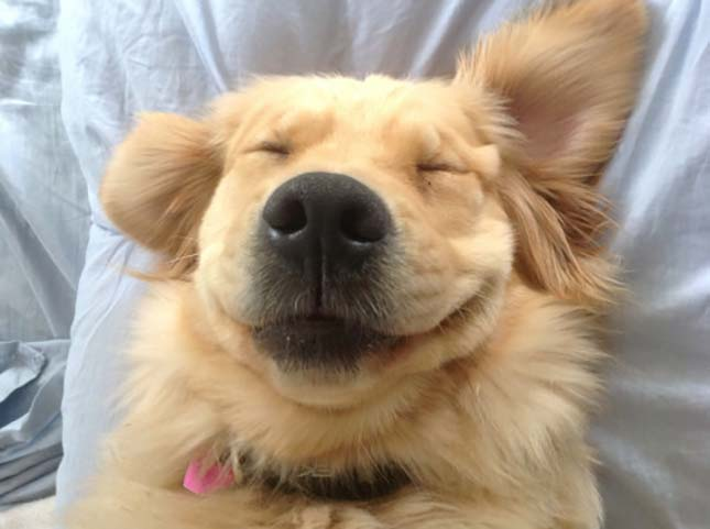 mosolygo-kutyak-3