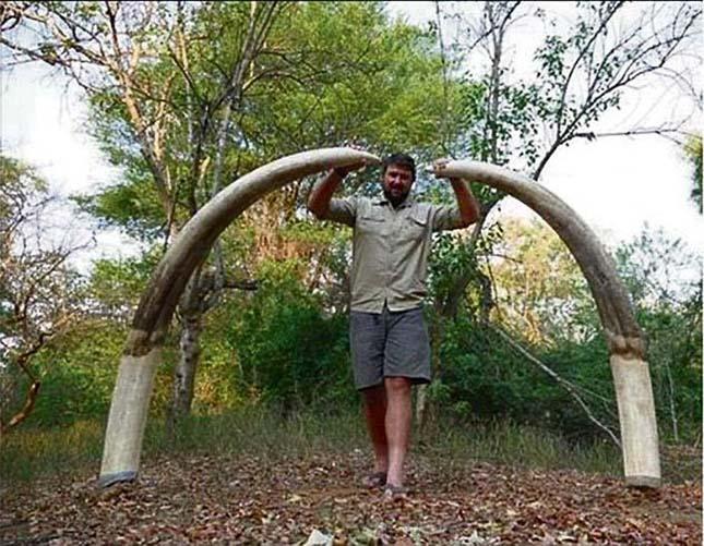 megolt-elefant