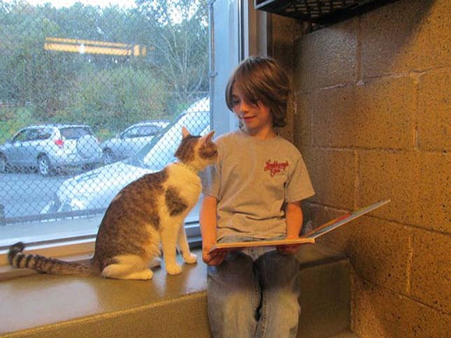 reading-children-shelter-cats-book-buddies-2