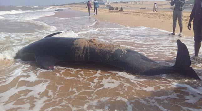 delfinpusztulas-2