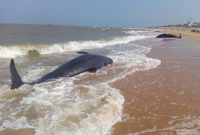 delfinpusztulas-3