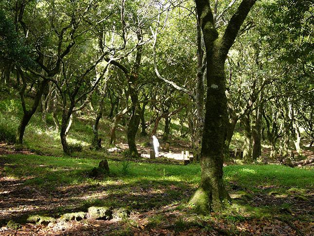 madeira-erdo
