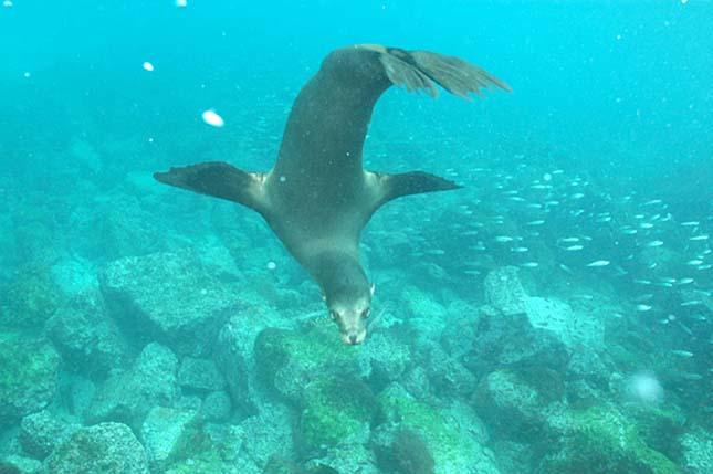 galapagos-szigetek-3