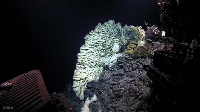 tengeri-szivacs-2