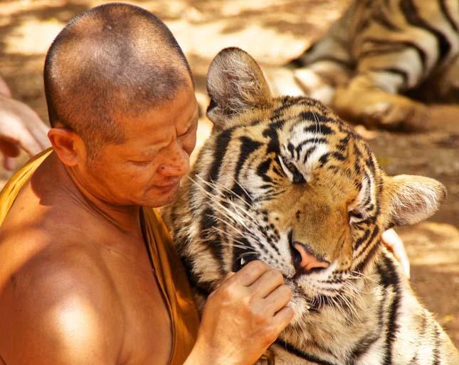 tigris-templom-11