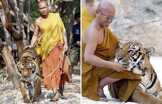 tigris-templom-7
