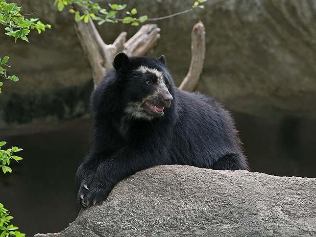 medve-1