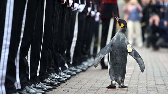 pingvin-6