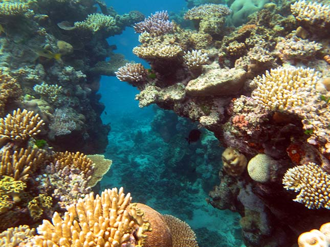 barrier-reef-4