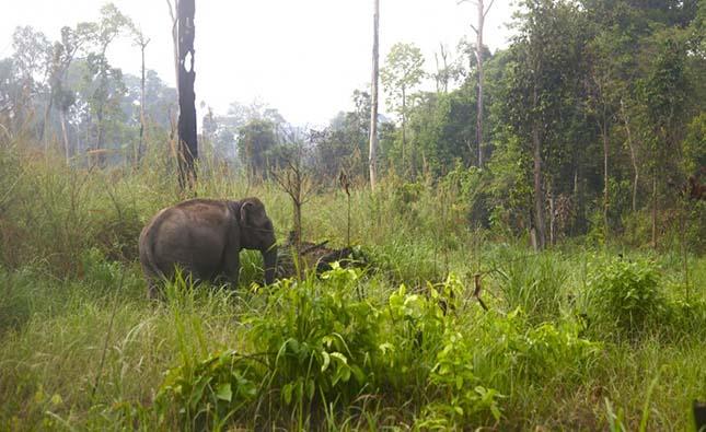 elefantmenhely-2