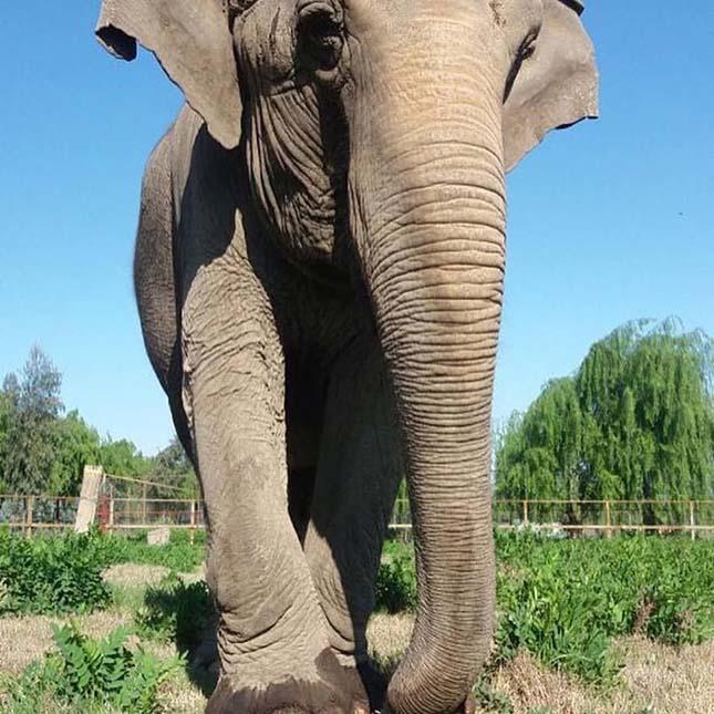 elefantmenhely-6