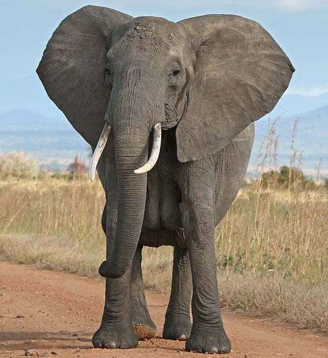 elefantok-4