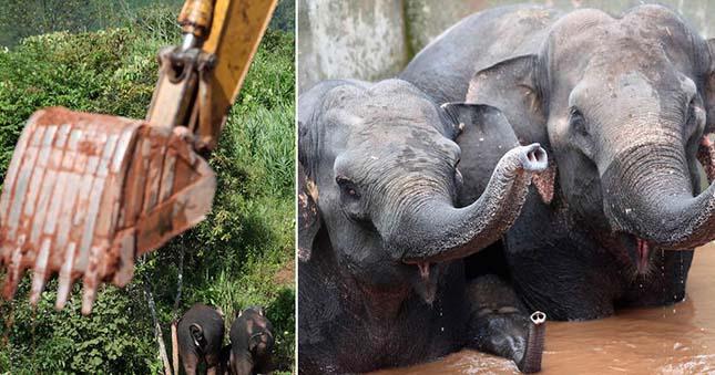 elefantok