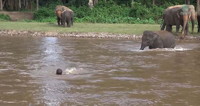 elefant-5