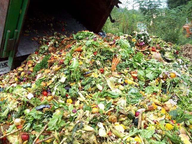 food-waste-7