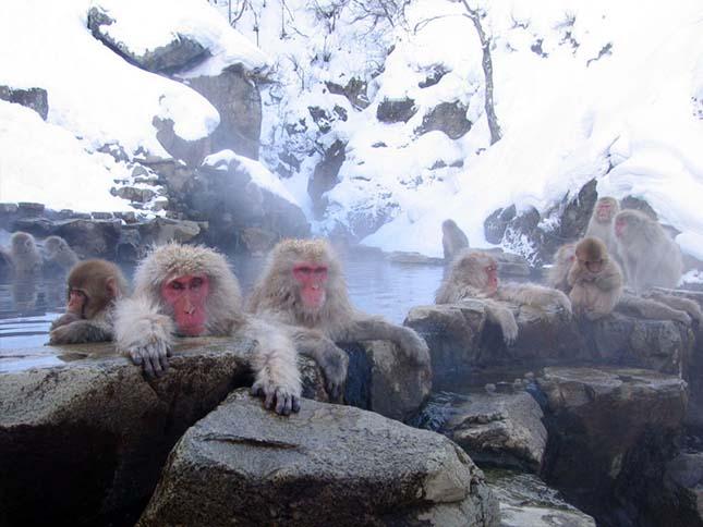 furdozo-makakok