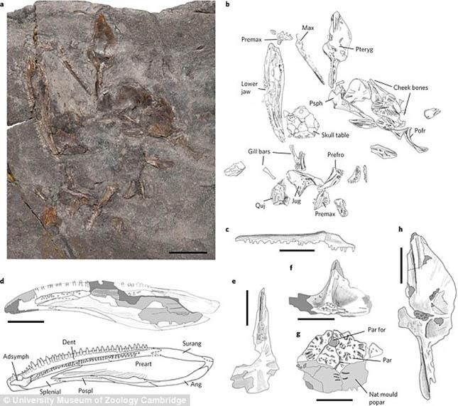 dinoszaurusz-2