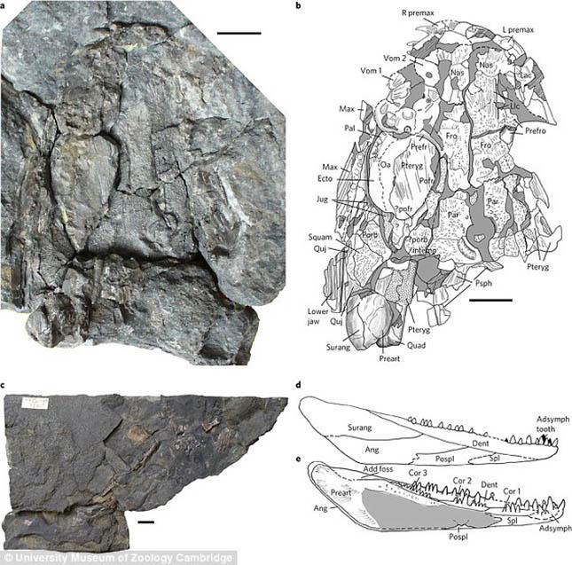 dinoszaurusz-3