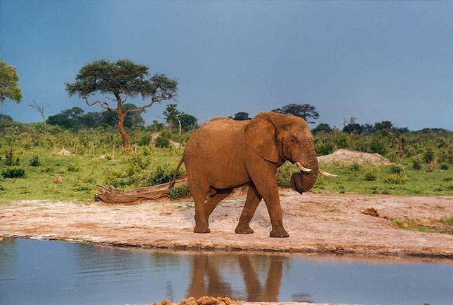 elefant-zimbabwe